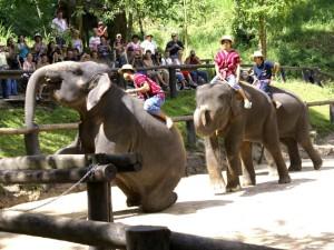 03-elephant-maesa-camp_lbb