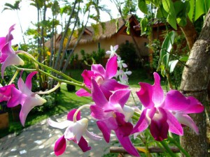 05-nice-flower-nice-resort-in-chiangmai-thailand_lbb