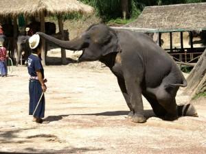 08-elephant-enjoy_lbb