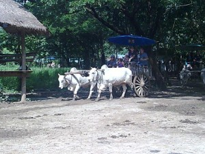 11-journey-by-ox-cart_lbb