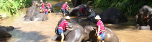 adventure elephant bathing (slide)