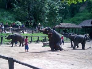 amazing elephant show