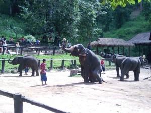 amazing-elephant-show_lbb