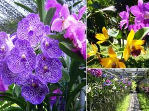 chiangmai-elephant-care-safari-orchid-farm