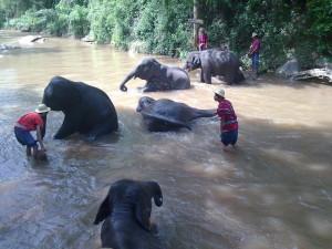 elephant bath trip