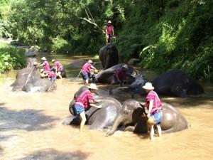 elephant-camp-show-bathing_lbb