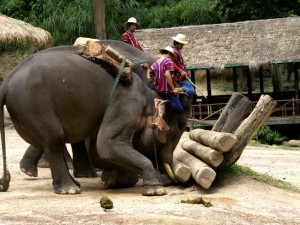 elephant-show-log_lbb
