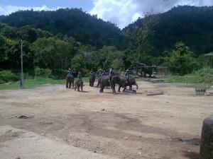 family elephant show in chiangmai