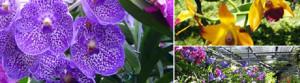 orchide (slide)